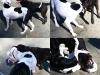 brookdaleparkdogpark-com_black-white-dogs