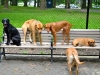 dogbench1