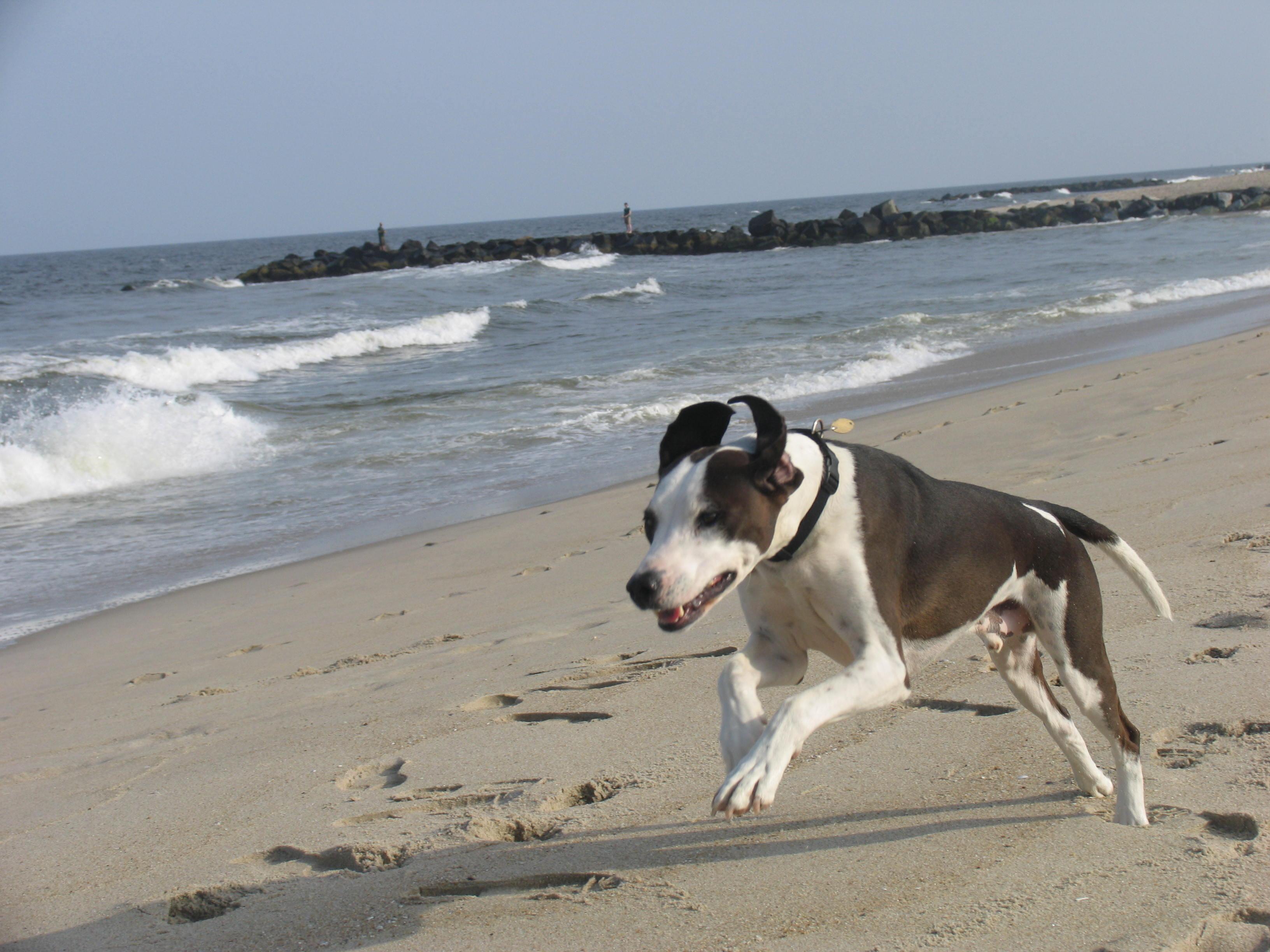 Henry misses the beach